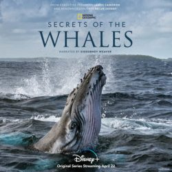 What to Watch: Secrets of the Whales