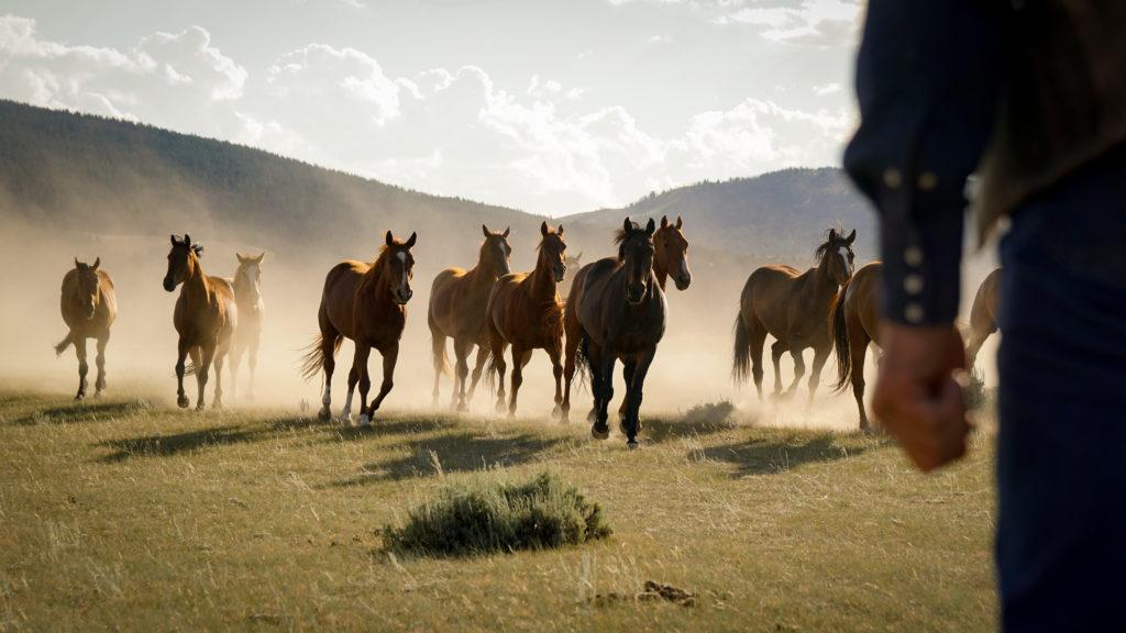 My Heroes Were Cowboys Trailer Released